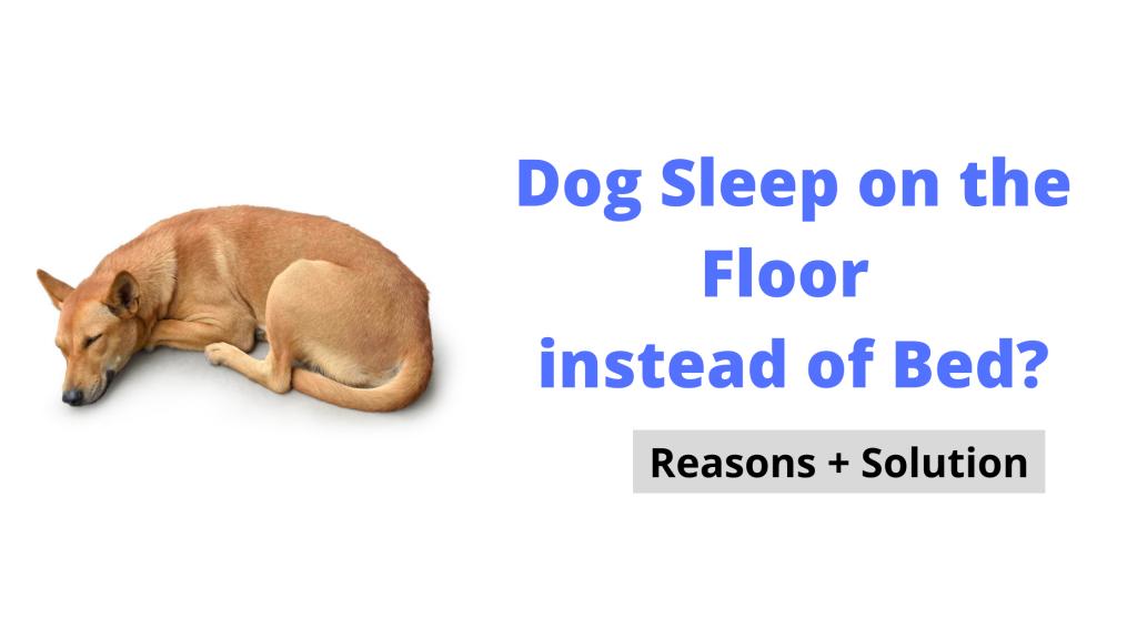 Dog Sleep on the Floor instead of Bed