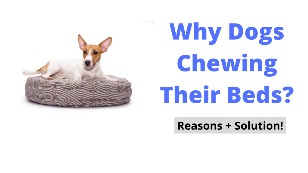 How to Stop Dogs Chewing Their Beds