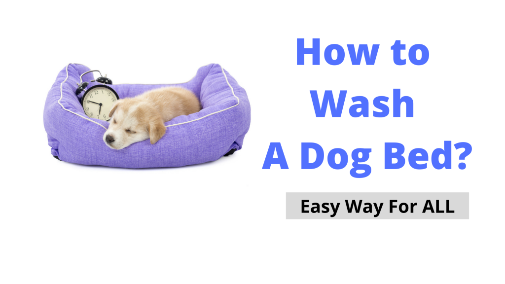 How to Wash A Dog Bed Which has no Removable Cover