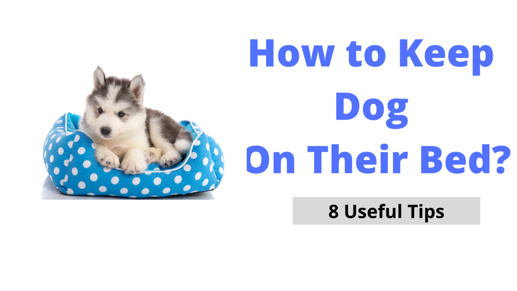How to keep Dog On Their Bed
