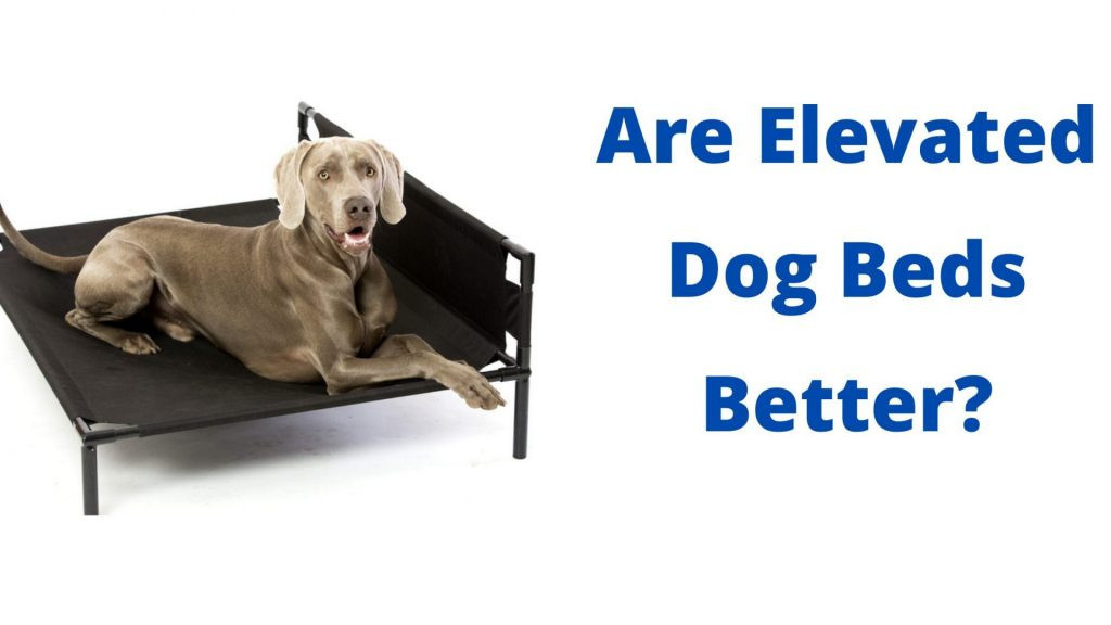 Are Elevated Dog Beds Better