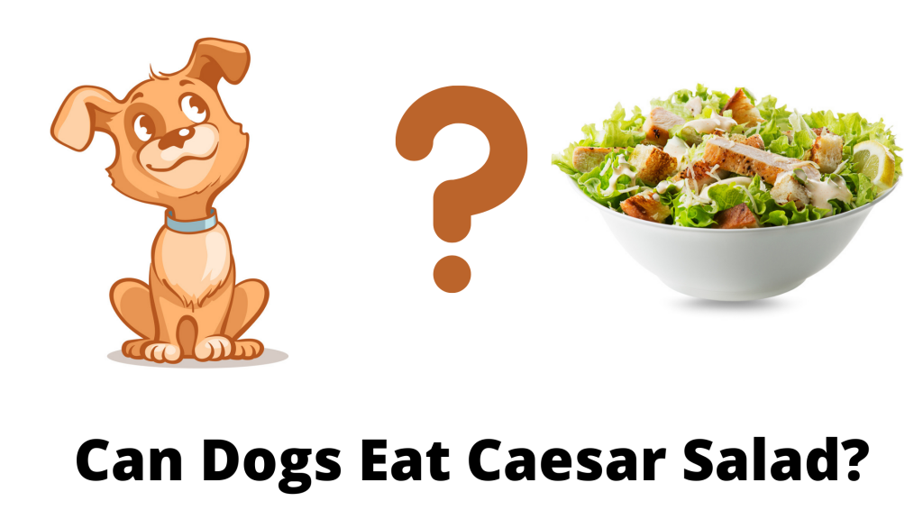 Can Dogs Eat Caesar Salad?