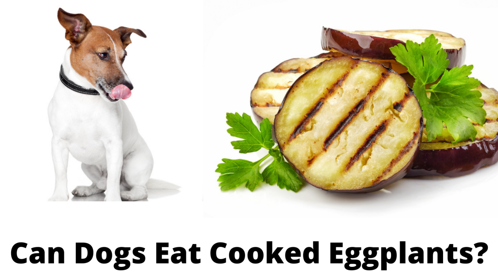 Can Dogs Eat Cooked Eggplants?