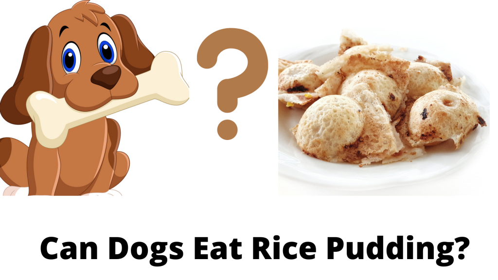 Can Dogs Eat Rice Pudding?