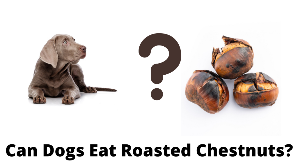 Can Dogs Eat Roasted Chestnuts?