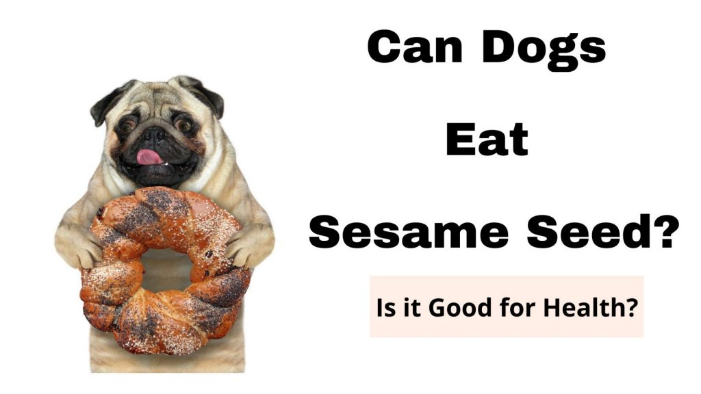 Can Dogs Eat Sesame Seed?