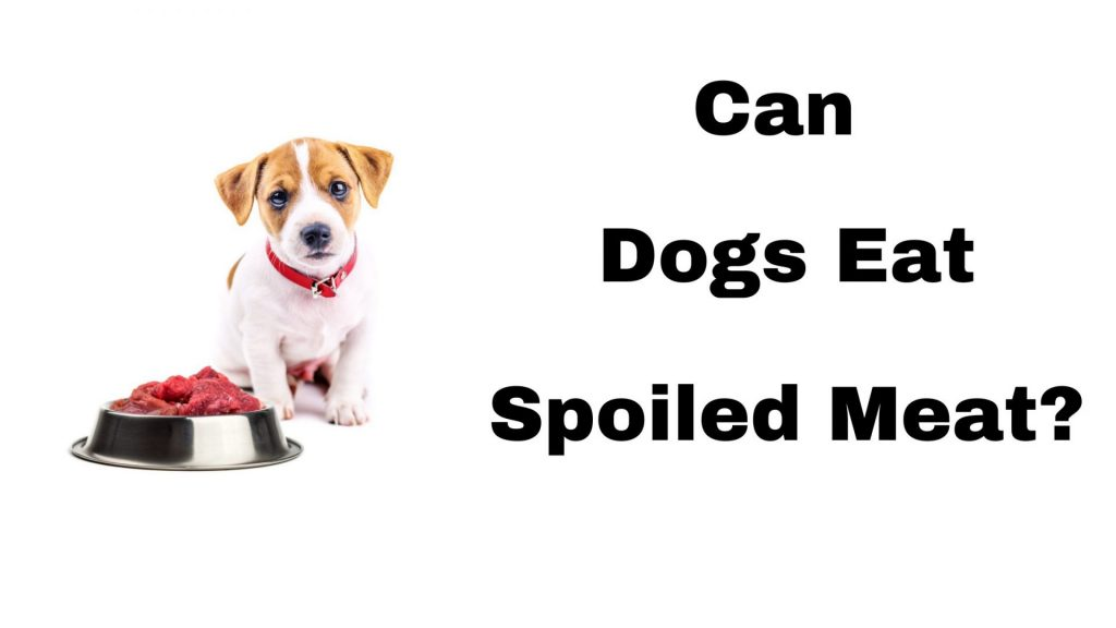 Can Dogs Eat Spoiled Meat