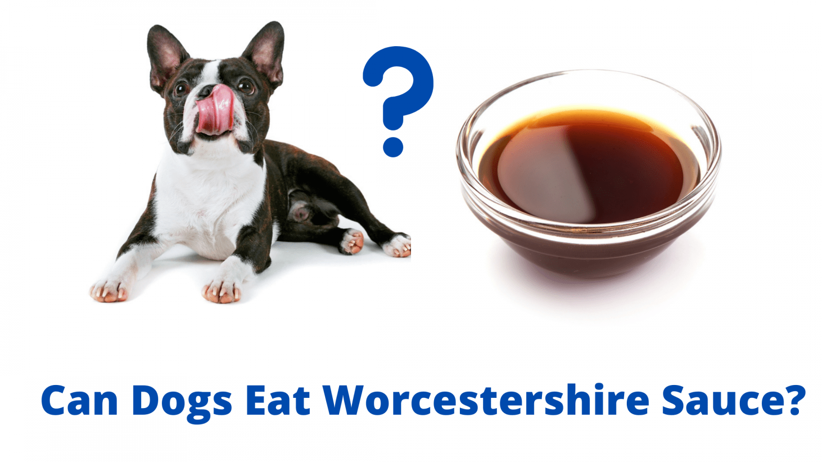 Can Dogs Eat Worcestershire Sauce