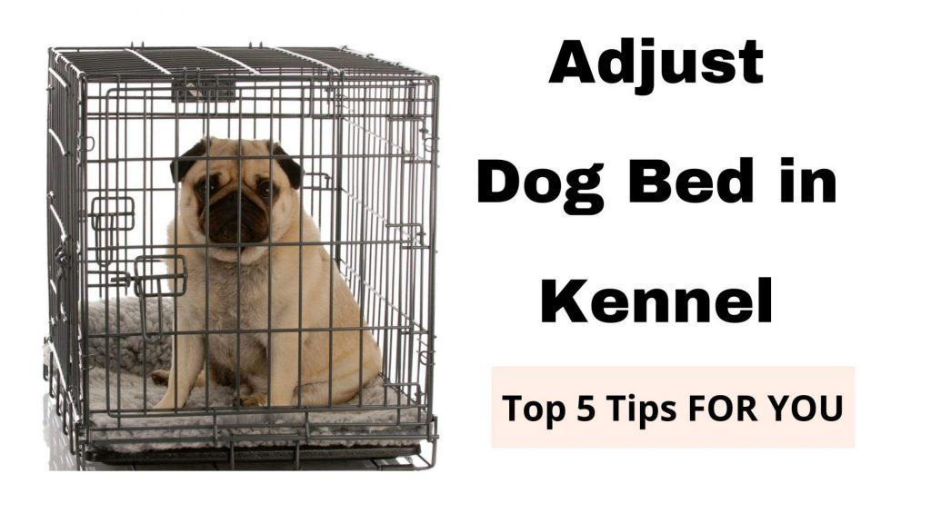Put Dog Bed in Kennel with Puppy Pad