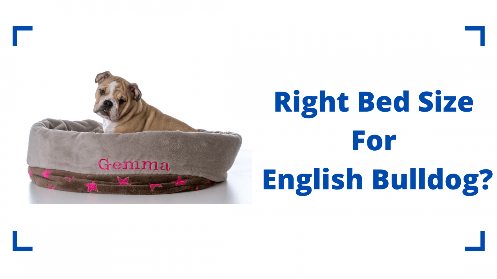 Right Bed Size For English Bulldog
