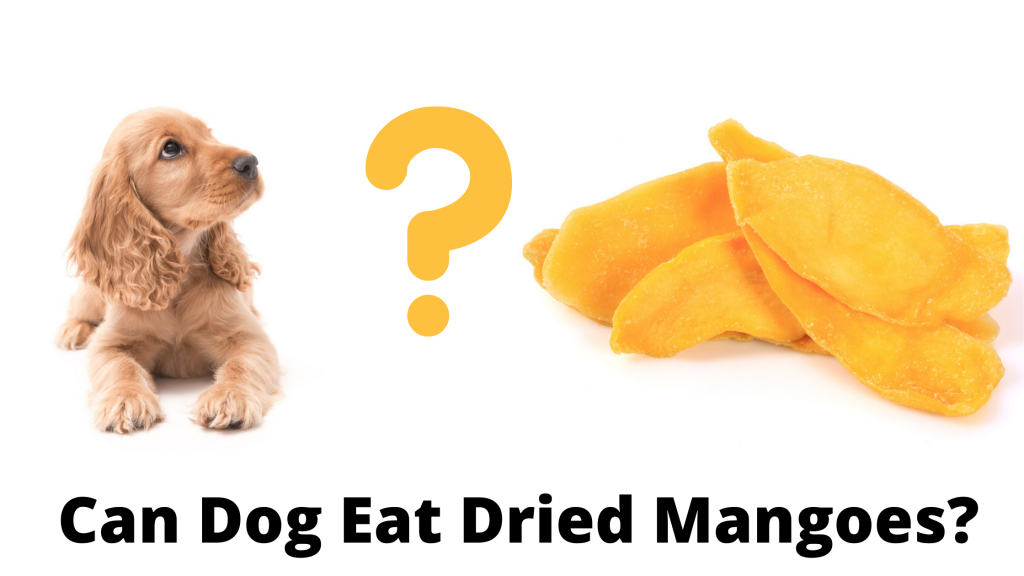 Can Dog Eat Dried Mangoes?