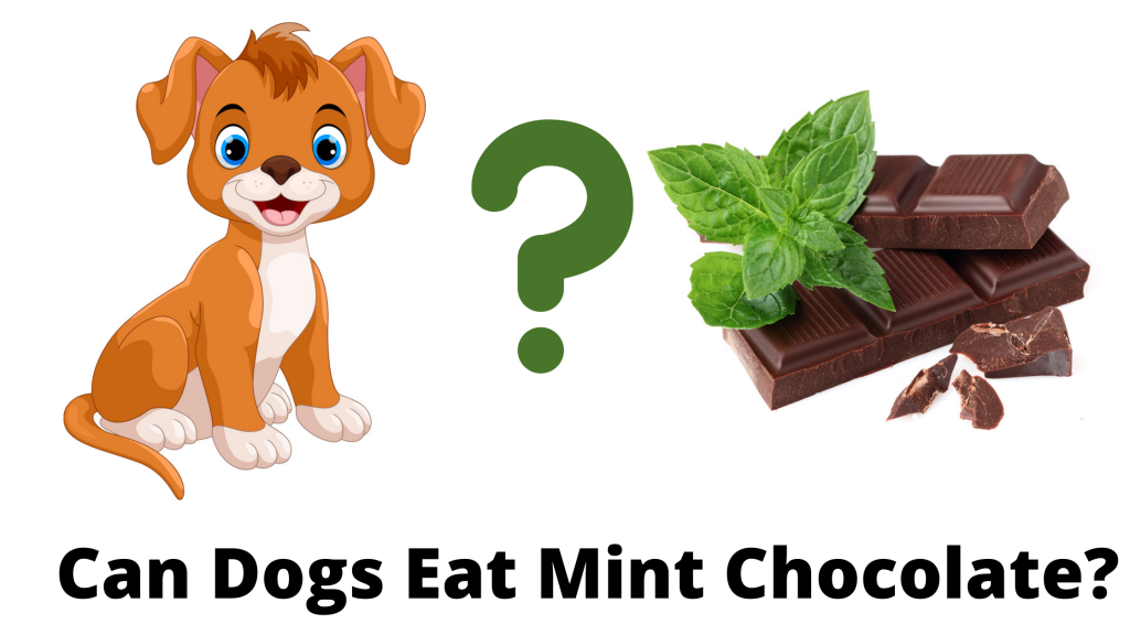 Can Dogs Eat Mint Chocolate?