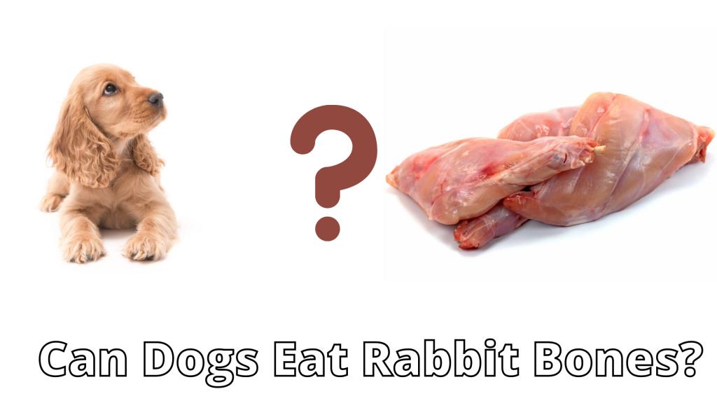 Can Dogs Eat Rabbit Bones?