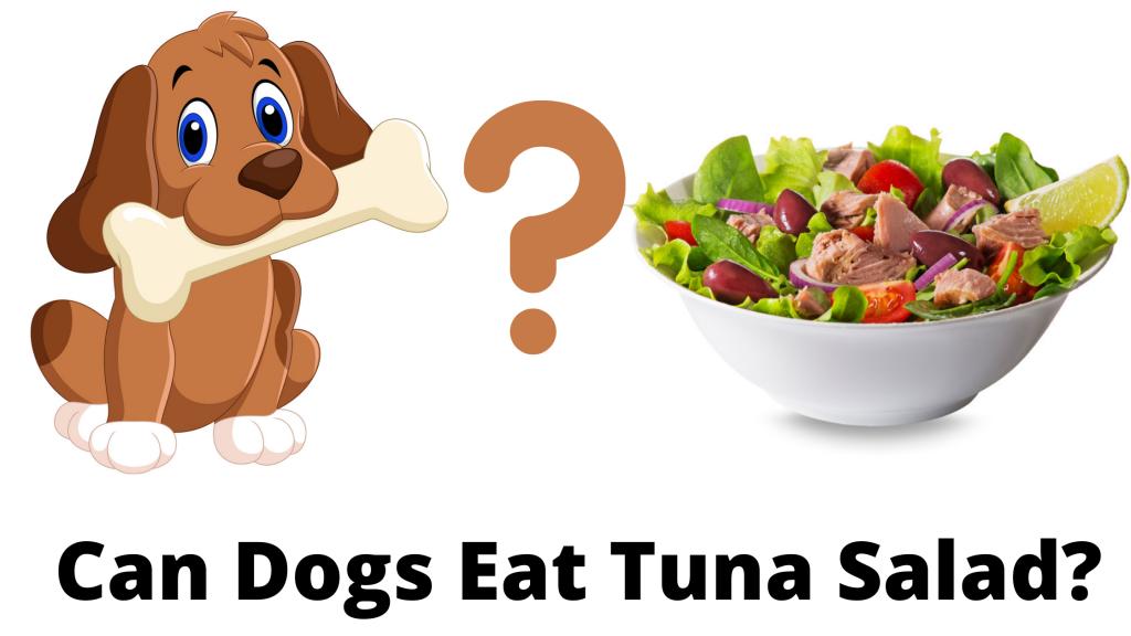 Can Dogs Eat Tuna Salad