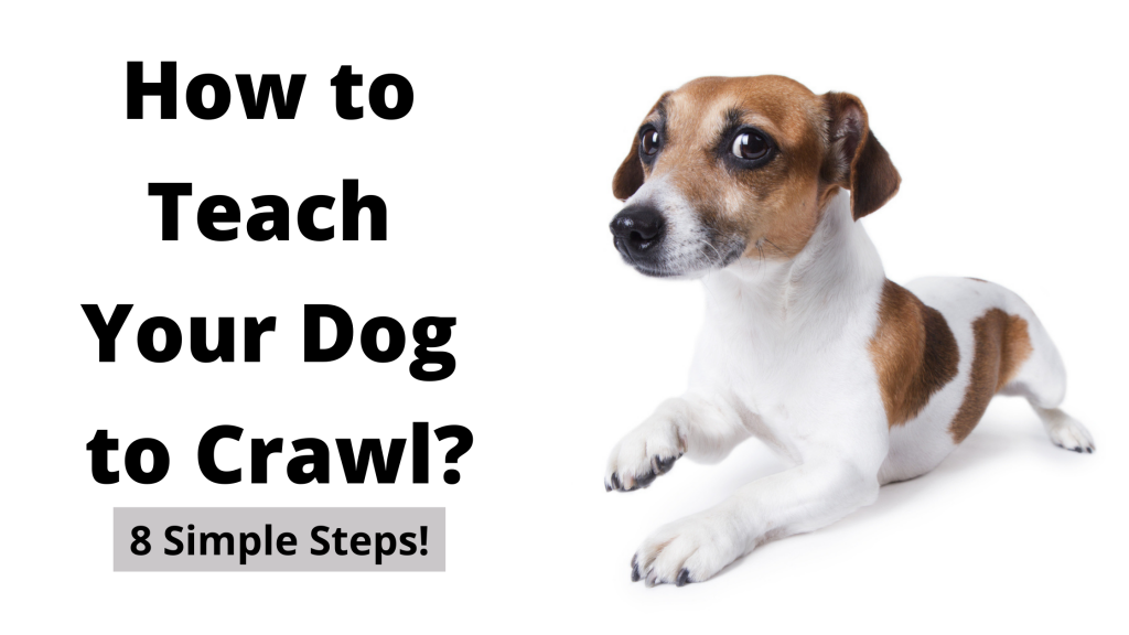 How to Teach Your Dog to Crawl?