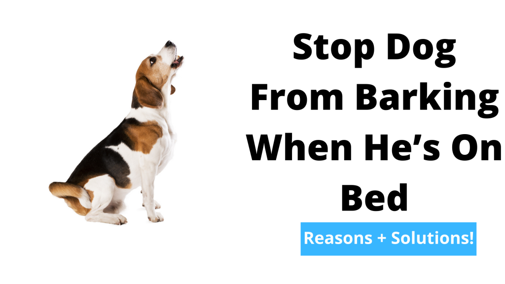 Stop Dog From Barking When He's On Bed