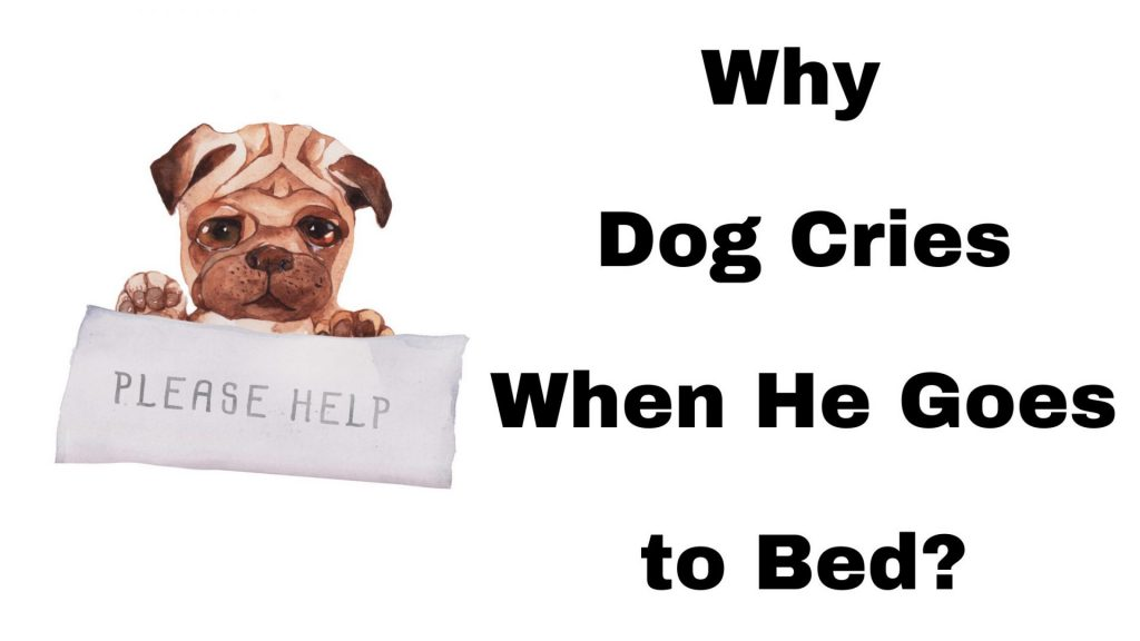 Why Dog Cries When He Goes to Bed