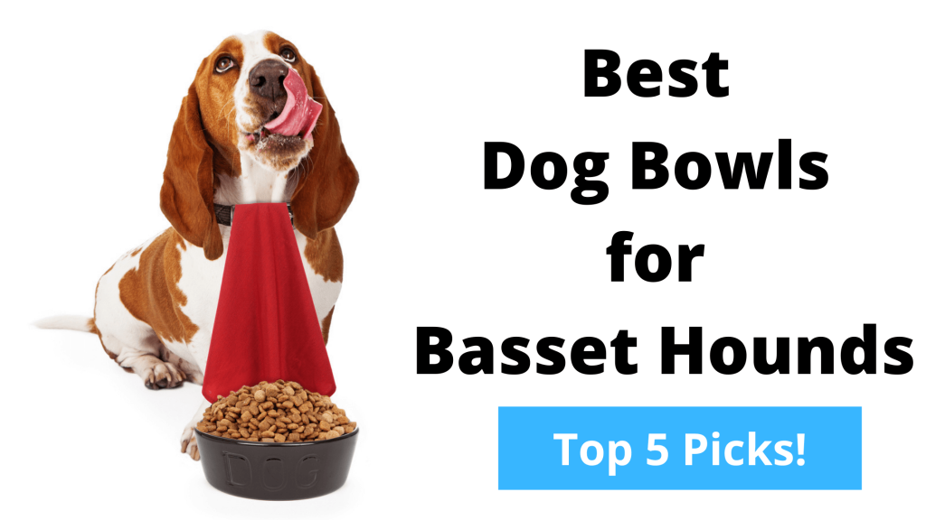 Best Dog Bowls for Basset Hounds