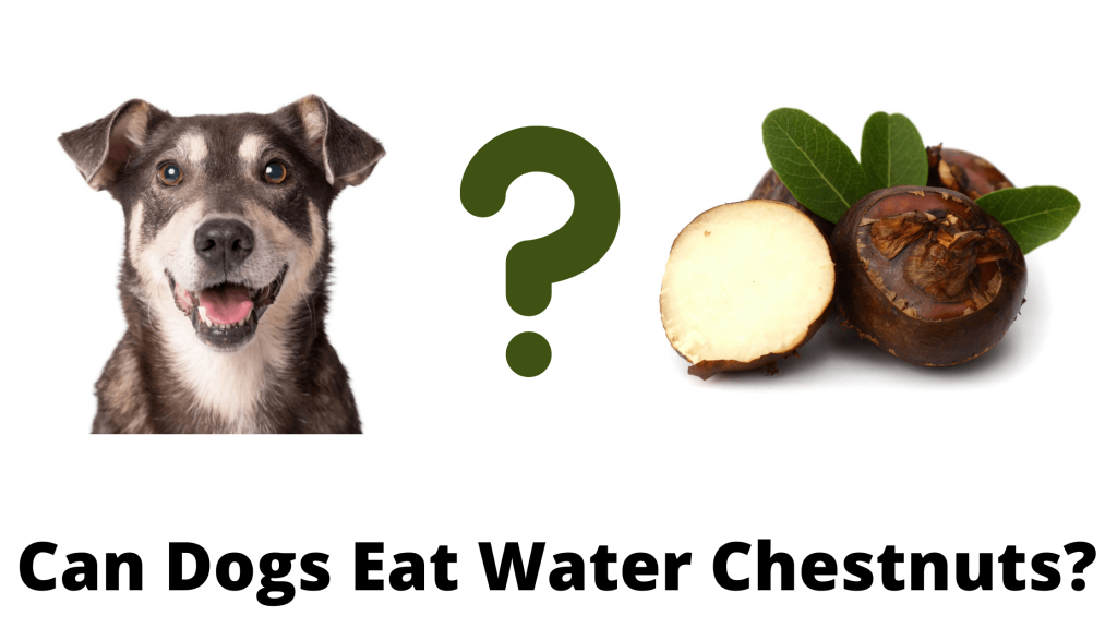 Can Dogs Eat Water Chestnuts?
