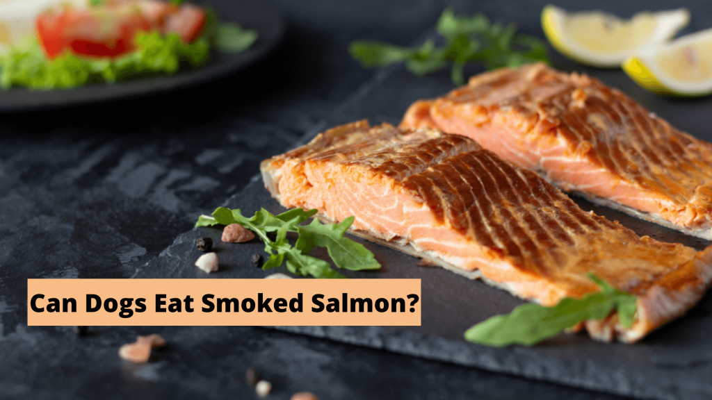 Can Dogs Eat Smoked Salmon?