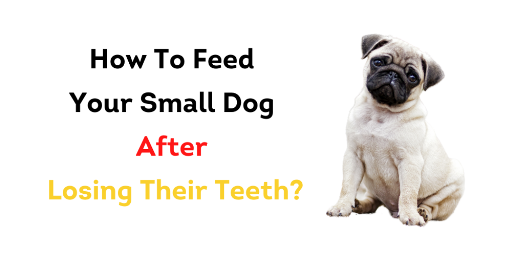 How To Feed Your Small Dog After Losing Their Teeth