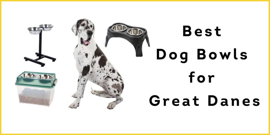 Best Dog Bowls for Great Danes